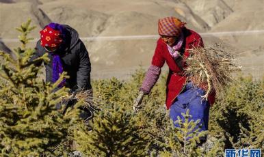 西藏:治沙造林 筑牢生態安全屏障