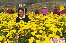 河南内乡:绿色产业富农 助推脱贫攻坚