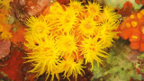 拯救珊瑚礁 保护美丽海底花园